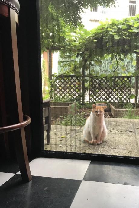 ヘレン@赤ドア